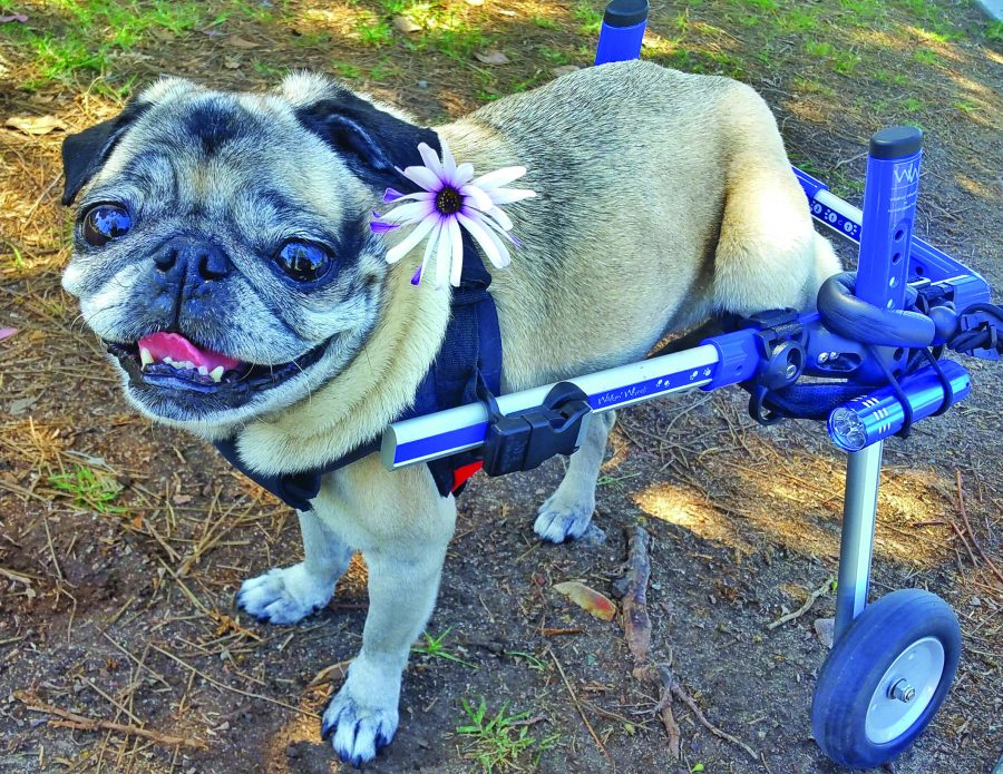 Dotty in wheelchair