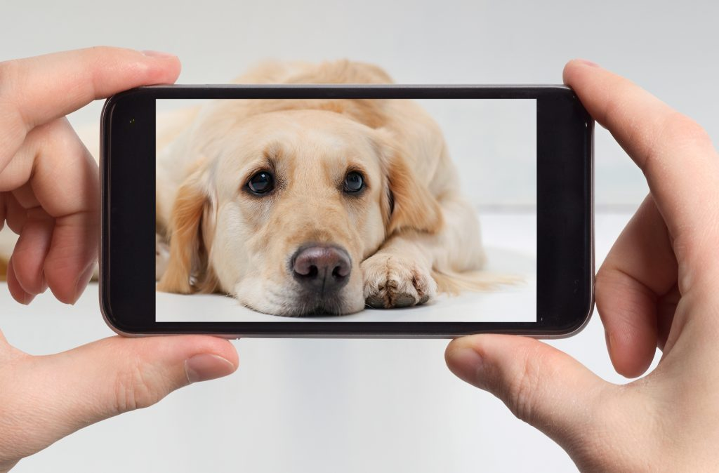 cell phone photography of pet