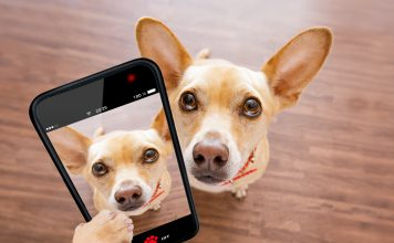 photo of dog holding a cell phone